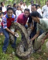 巨大ヘビ,マレーシア